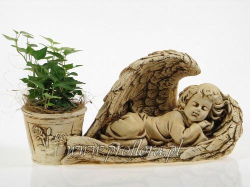 anioł śpiący kompozycje kwiatowe