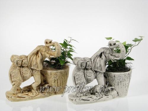dekoracje kwiatowe słonik garbusek - produkcja Proflora