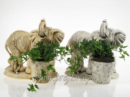 kompozycje kwiatowe słoń afrykański mały Proflora