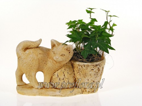 kot Filemon dekoracje kwiatowe od Proflory