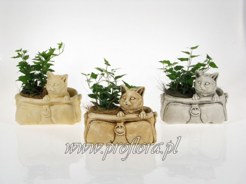 kot w torbie mały ikebana - od producenta