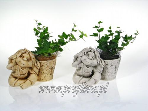 skrzat śmieszek dekoracje kwiatowe - produkcja Proflora