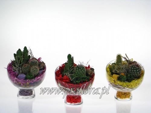 kompozycje kwiatowe ścięta kula mała (nocnik mały) kaktus kolor od Proflory