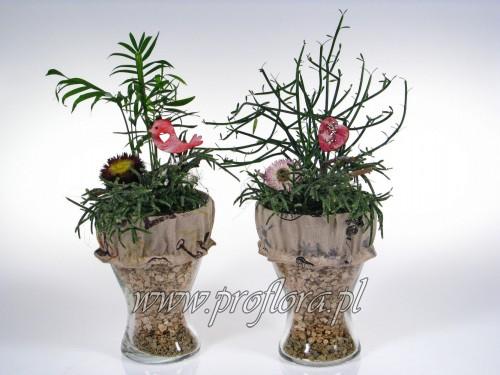 puchar duży sucul Walentynkowy kompozycja kwiatowa - produkcja Proflora