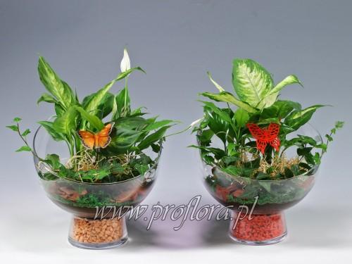 dekoracje kwiatowe ścięta kula duża (nocnik duży) - producent Proflora