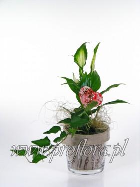 donia mała ECo Walent kompozycja kwiatowa - produkcja Proflora