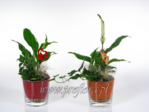 donia mała Walentynkowa dekoracja kwiatowa - od producenta