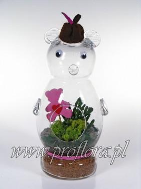 kompozycje kwiatowe miś szklany sukulent MD - produkcja Proflora